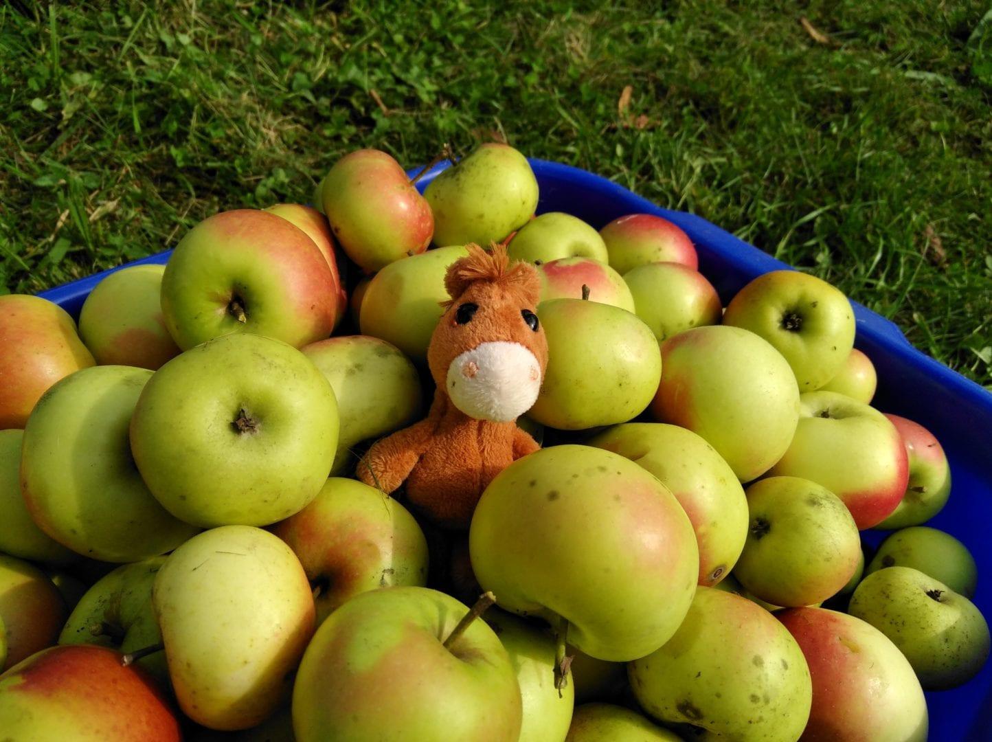 Lernen mit Äpfeln