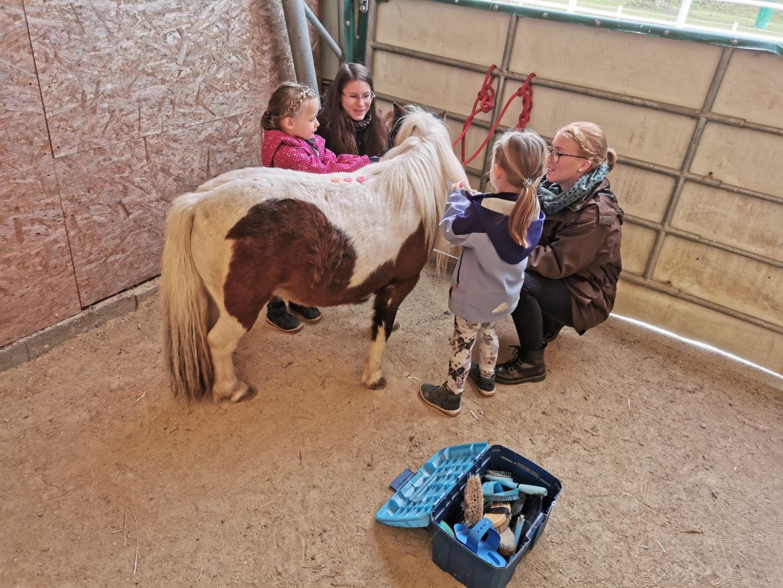 Entwicklung numerischer Fähigkeiten mit Pferd
