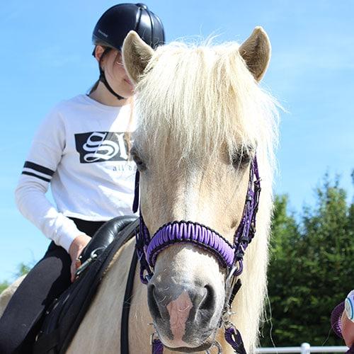 lernen-mit-Pferden-Ausbildung-bild-2