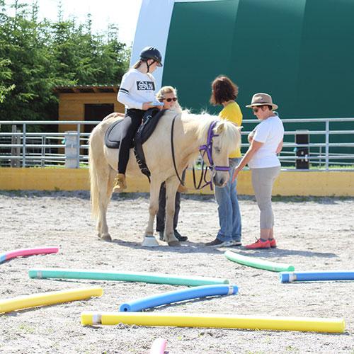 lernen-mit-Pferden-Ausbildung-bild-3