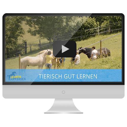 lmp-screen-videos-vorschau
