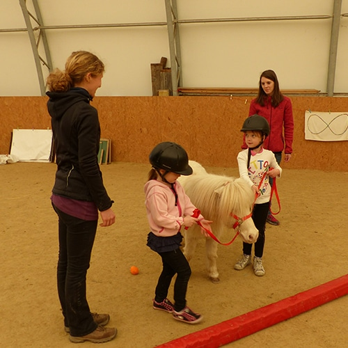 Lernen-mit-Pferden-Lernfit-2