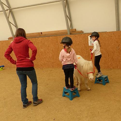 Lernen-mit-Pferden-Lernfit-3